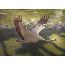Las grullas vuelan a Extremadura