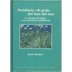 Posidònia: els prats del fons del mar